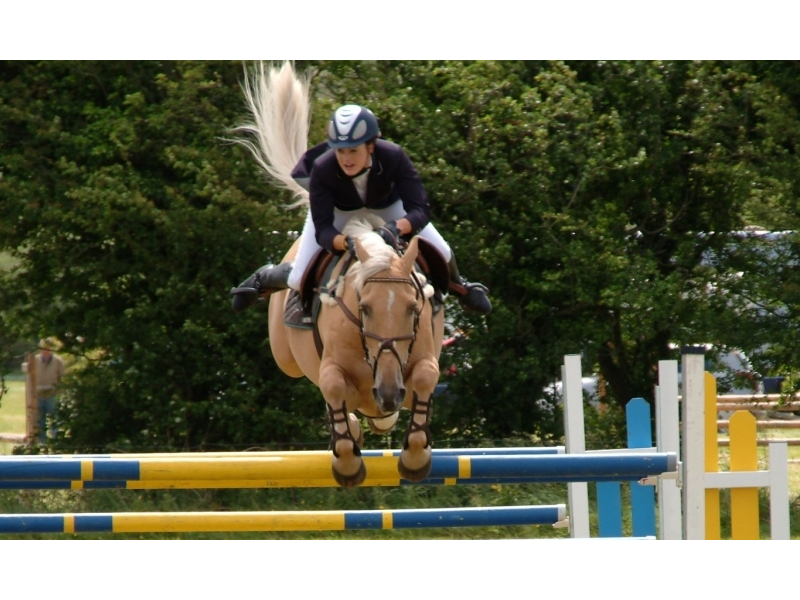 showjumping1-cropped